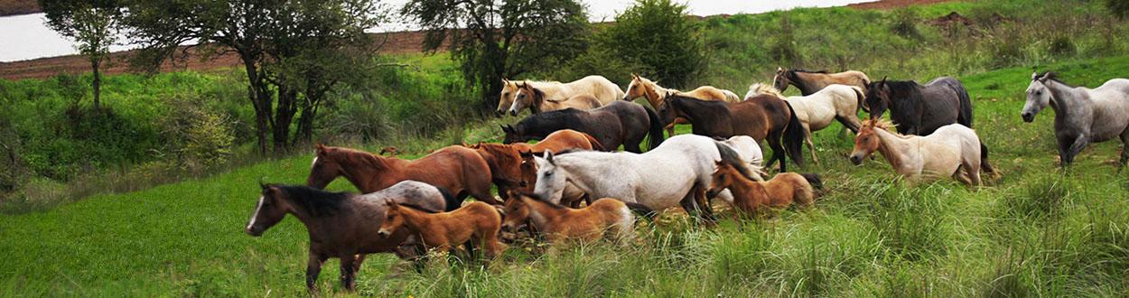 servicios_caballos